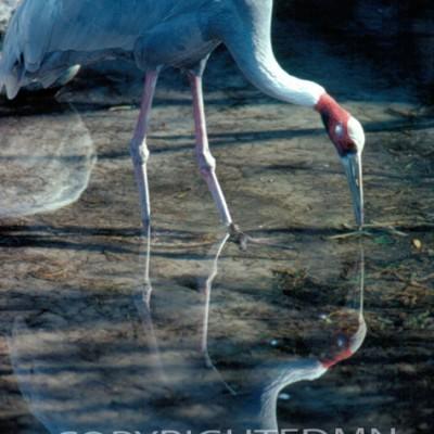Bird #3 - Color