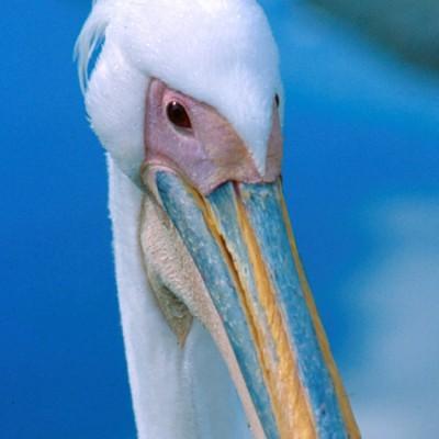 Bird #4 - Color