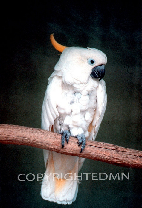 Bird #5 - Color