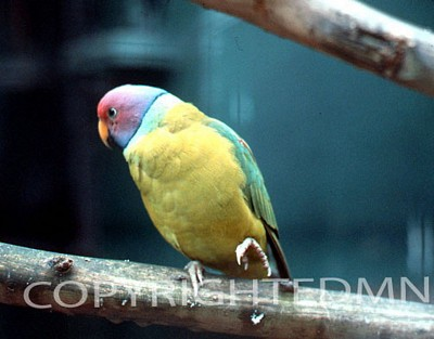Bird #6 - Color