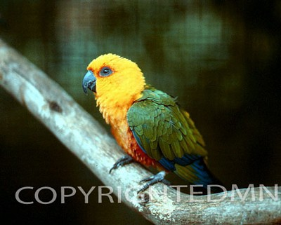 Bird #7 - Color