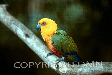 Bird #7 - Color