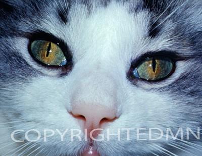 Cat #1- Color