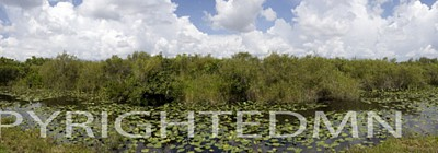 Everglades Panorama #1, Shark Valley, Florida 08 - Color Pan