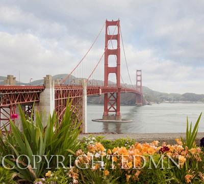 Golden Gate Bridge & Flowers, San Fransisco, California 11 - color