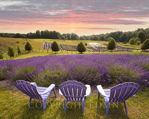 Lavender Chairs, Horton Bay, Michigan 14-color.tif