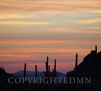 Saquaro Sunset, Tucson, Airizona 14-color