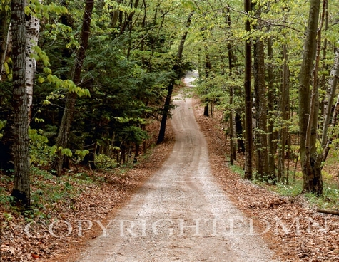 Forest Road, Michigan