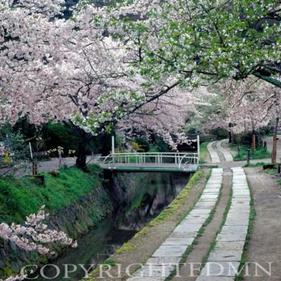 Governors Walk, Kyoto, Japan 05