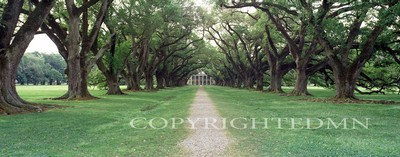 Oak Alley, Louisiana - Pan
