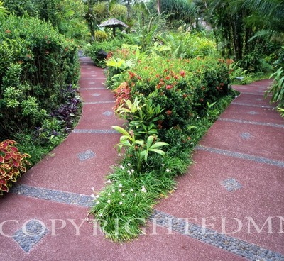 Pathway #6, Costa Rica 04