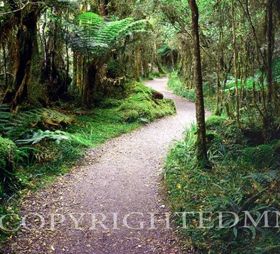 Pathway Of Ferns, Outback, Australia 01- Color