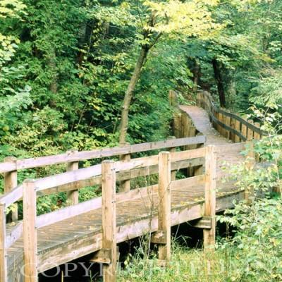 Pathway To Wagner Falls, Munising, Michigan
