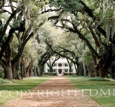 Rosedown Plantation, Louisiana 97