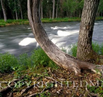 Russian River #2, Alaska 85