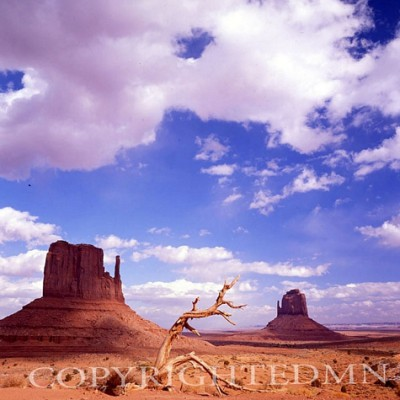The Mittens & Weathered Tree, Monument Valley, Arizona
