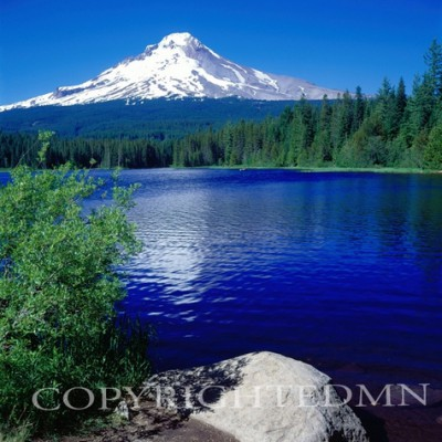 Trillium Lake & Mountain, Oregon 97