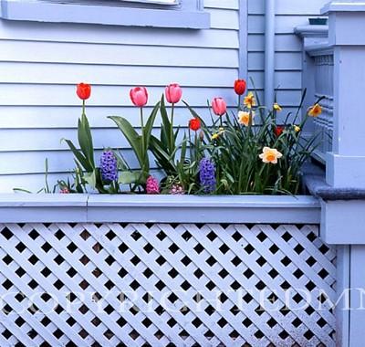 Tulips & Lattice, Newport, Rhode Island 03