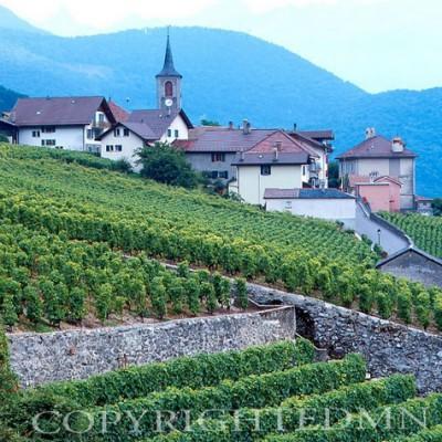 Vineyards #1, Epesses, Switzerland