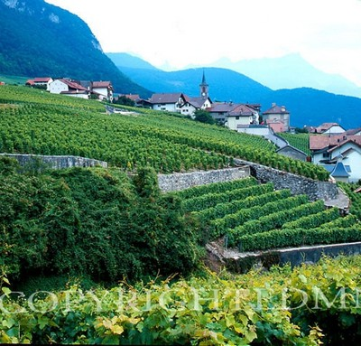 Vineyards #3, Epesses, Switzerland