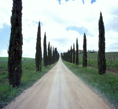 Cypress Tree Lane, Tuscany, Italy 06 - Color