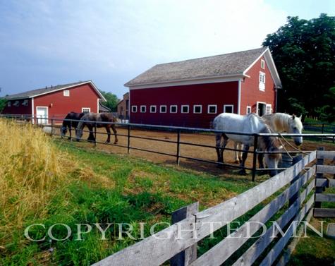 Horses At The Farm #1, Michigan 06 - Color