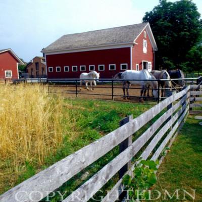 Horses At The Farm #2, Michigan 06 - Color