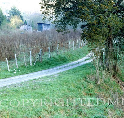 Backroad, Smoky Mountains, Tennessee 93 - Color
