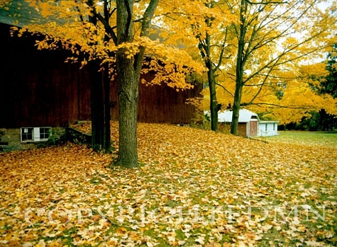 Barn & Fallen Leaves, Farmington Hills, Michigan - Color