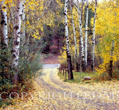 Birch Tree Drive,Sante Fe, New Mexico 06 - Color