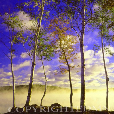 Birch Trees & Mist, Negaunee, Michigan - Color