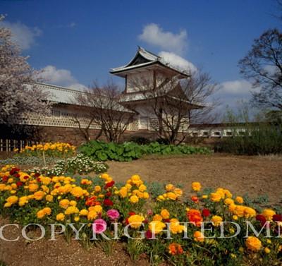 Castle Gate & Flowers, Kanazawa, Japan 05 - Color