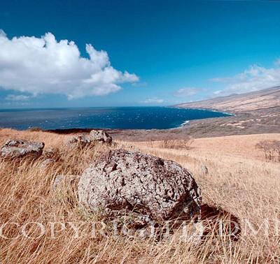 Fields & Rock, Hawaii - Color