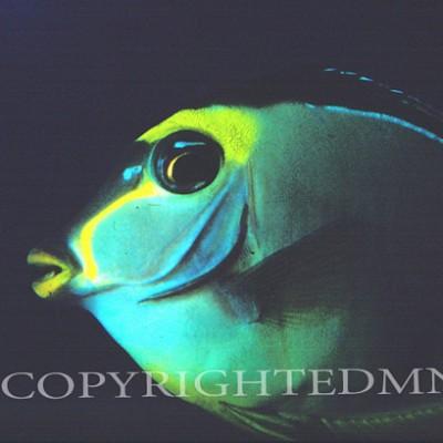 Fish #3 - color