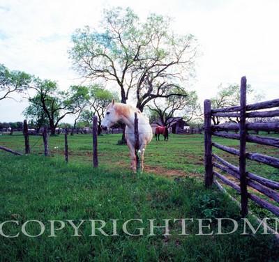 Texas Ranch #2, Johnson City, Texas 07 - Color