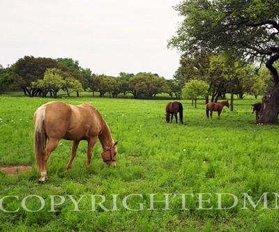 Texas Ranch #3, Ingram, Texas 07 - Color