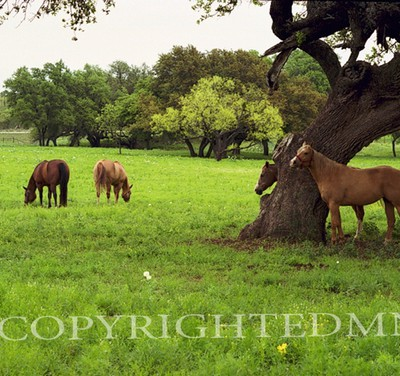 Texas Ranch #4, Ingram, Texas 07 - Color