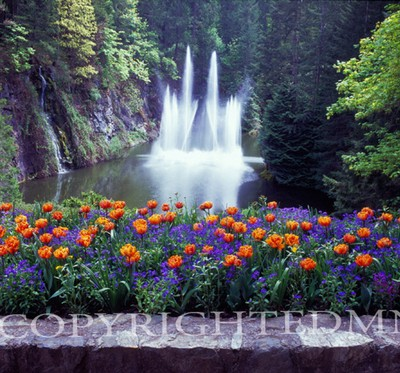 Butchart Garden Fountain, Vancouver, British Columbia 07 - Color