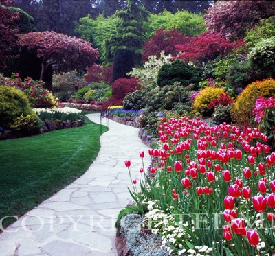 Butchart Gardens And Path #3, Vancouver, British Columbia 07 - Color