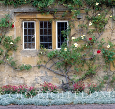 Window In The Cotswolds, England 89 - Color