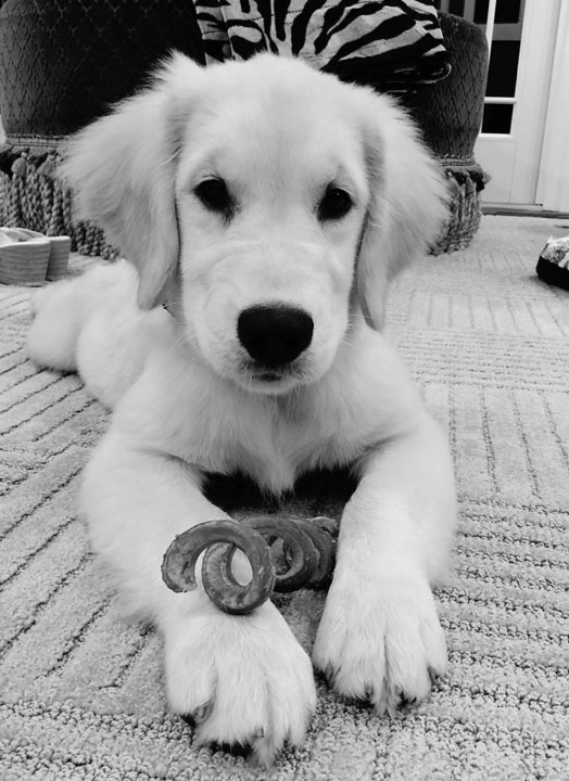 Sage with bully stick #2 B&W