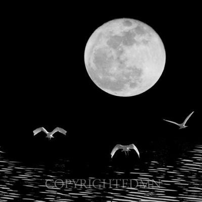 Moon Flight, Delray Beach, Florida 10