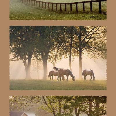 Eight Horses in Morning Mist, Kentucky 08 - Color Triptych