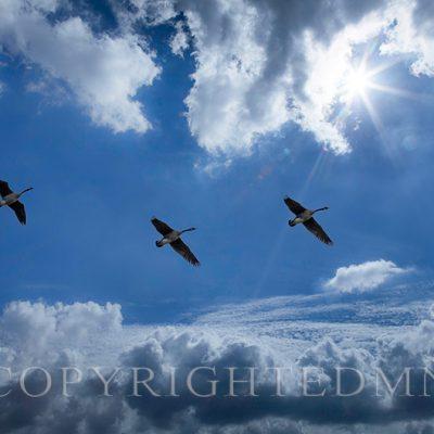 Sunbeam Flyers Farmington Hills '18