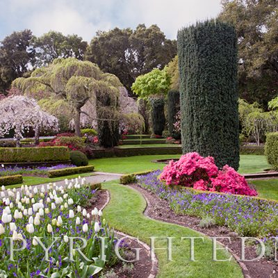 "Filoli Gardens, Woodside, California ""11 - color"
