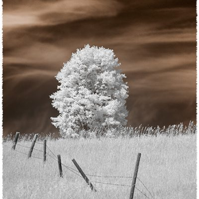 Lone Tree & Fence, Harbor Springs, Mich.,'18 IR