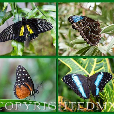 Butterfly Group, AZ, '19, Color