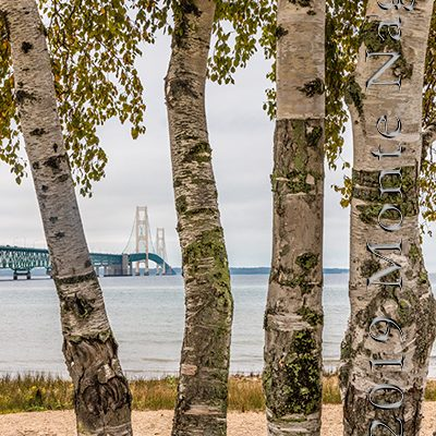 Mackinaw Bridge and Birch Trees, MI, '15
