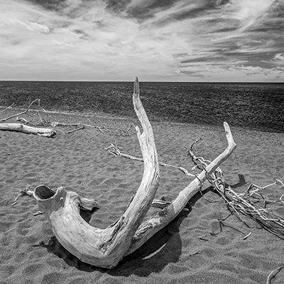 Driftwood, Leamington, Ont, '19